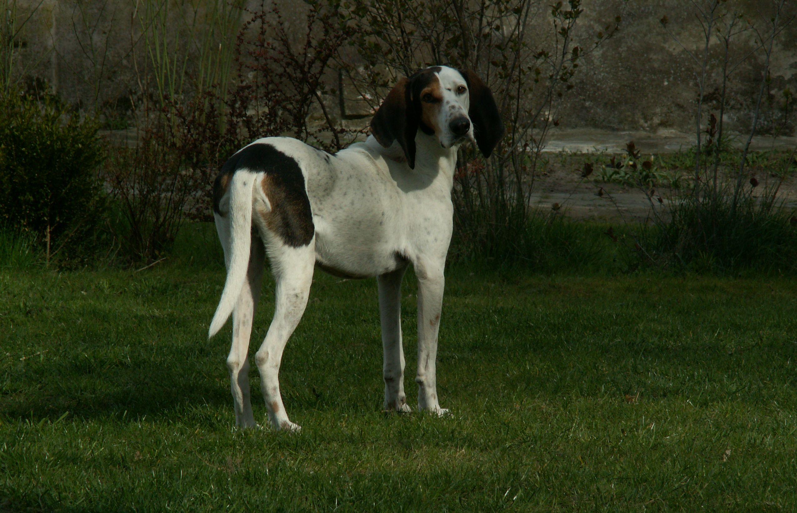 Eddas Hund, Referenzfoto.