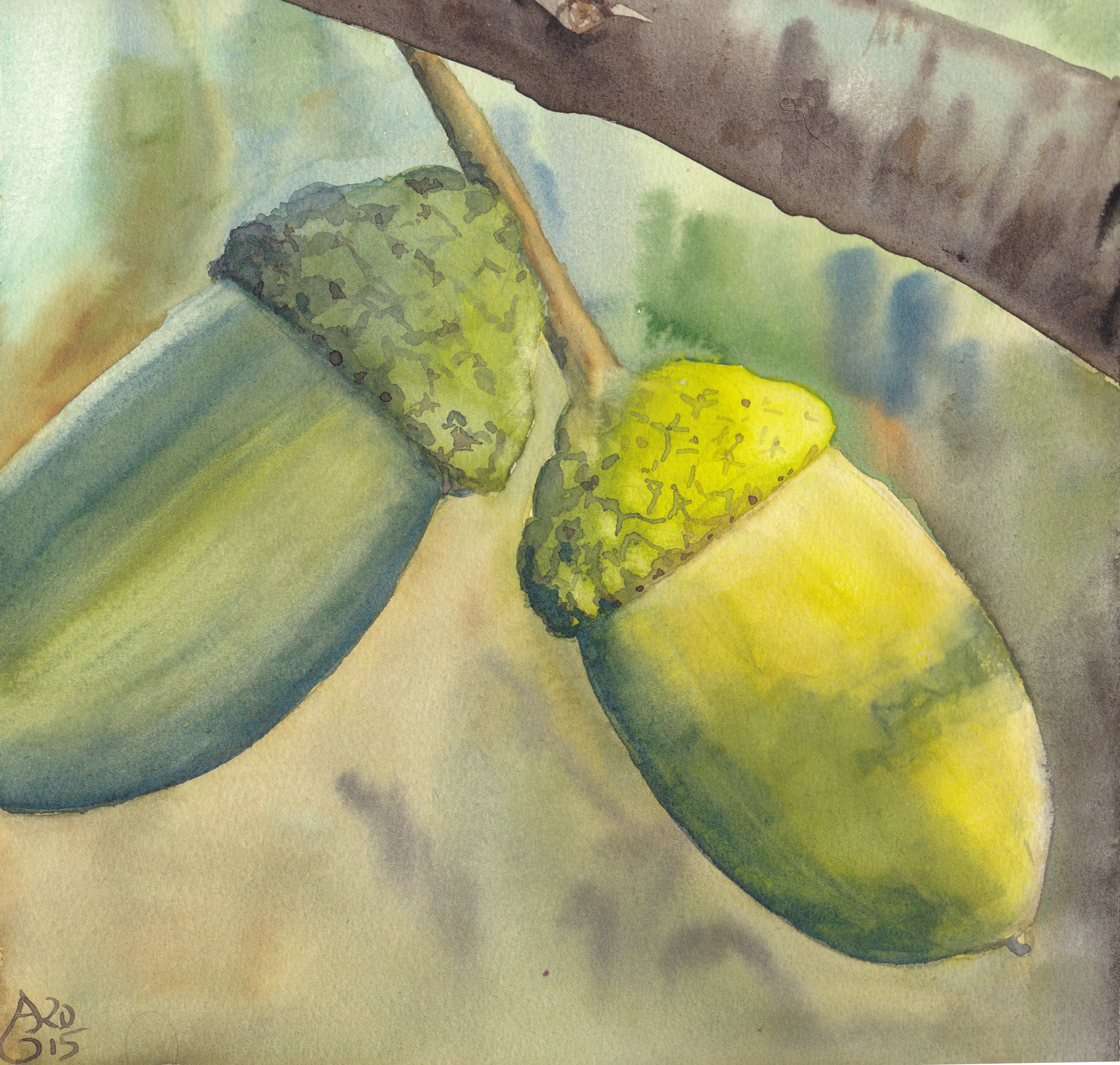 "Acorns. (Eicheln) Aquarell auf 200g/m mattem Bütten-Aquarellkarton, 22,5 x 22,5 cm. 80 € (gerahmt). Watercolours on mould-made 200 gsm watercolour board, 8.9"" x 8.9"". $ 90 (framed)."