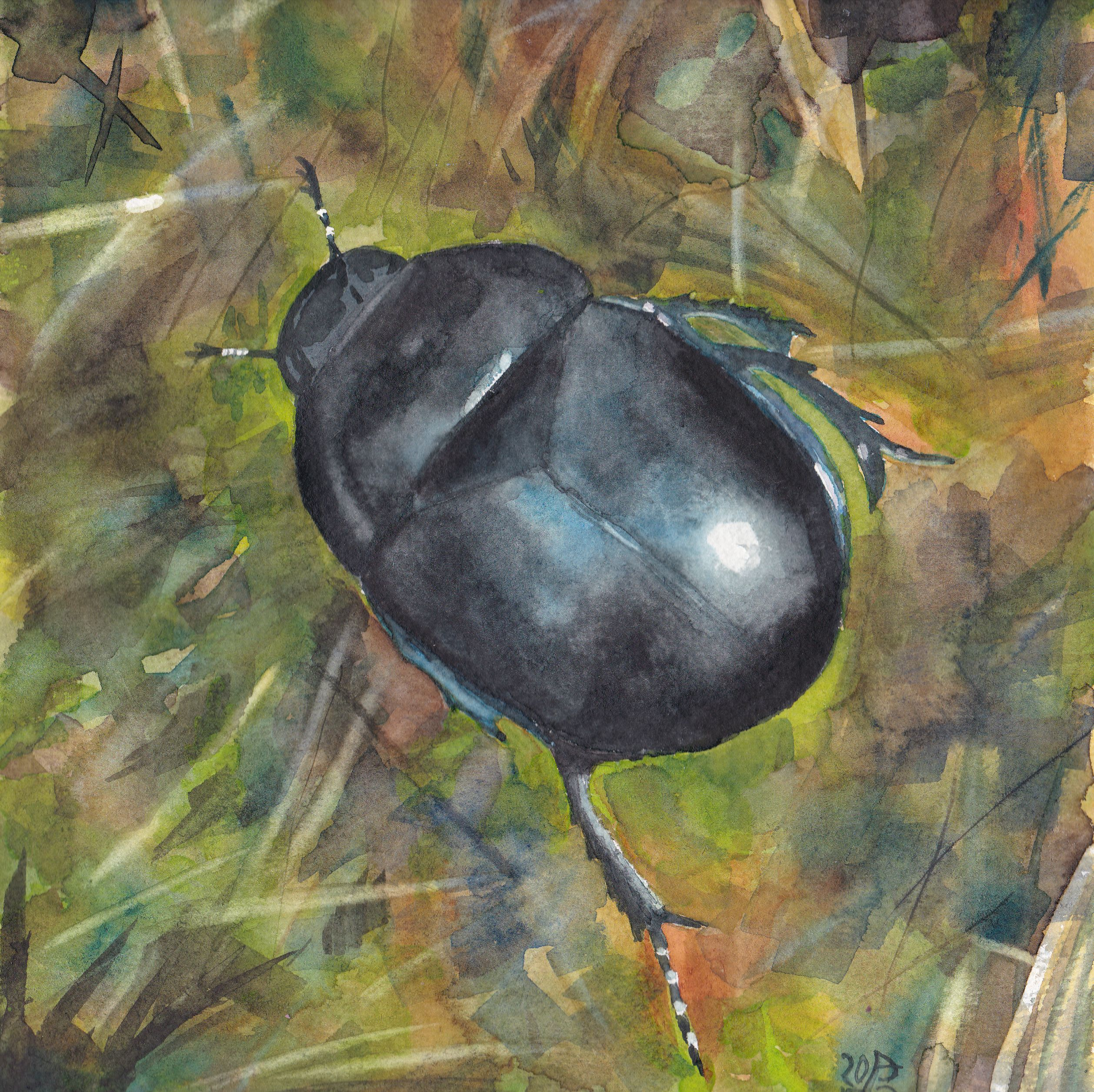Käfer || Beetle Aquarell auf 200g/m ruaem Bütten-Aquarellkarton, 22,5 x 22,5 cm. 80 € (gerahmt). Watercolours on mould-made 200 gsm watercolour board, 8.9″ x 8.9″. $ 90 (framed).