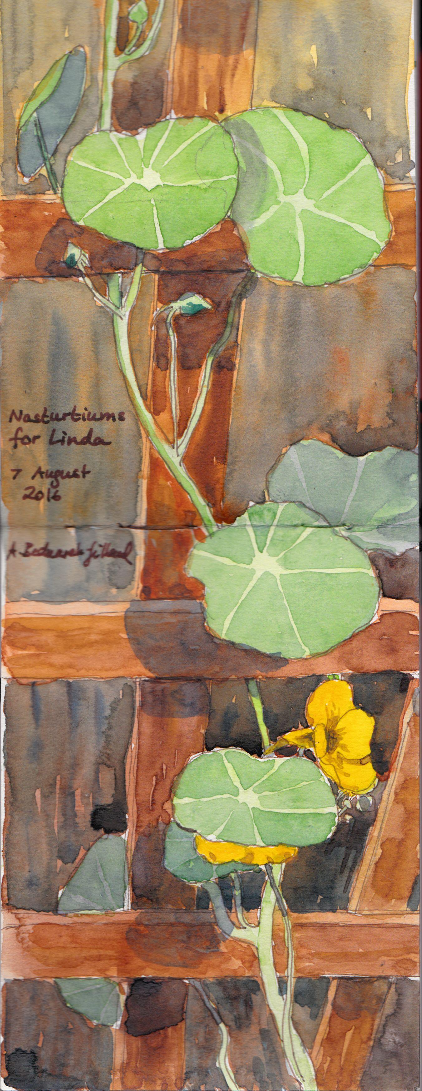 This year's nasturtiums| Kapuzinerkresse 2016