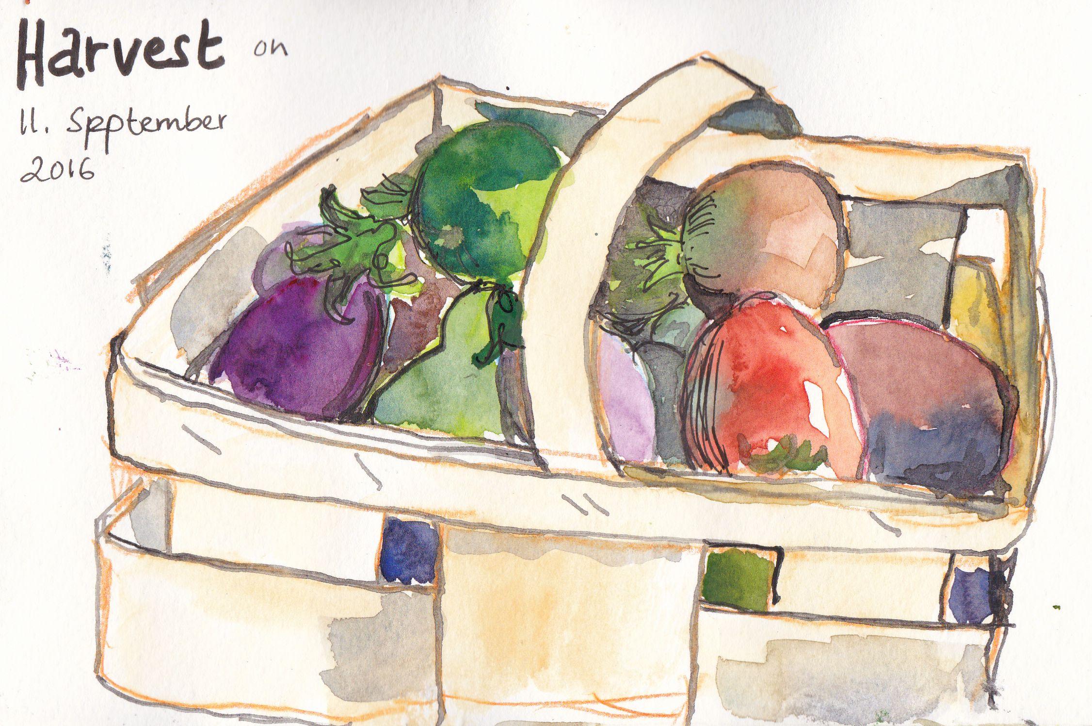 Harvest | Ernte