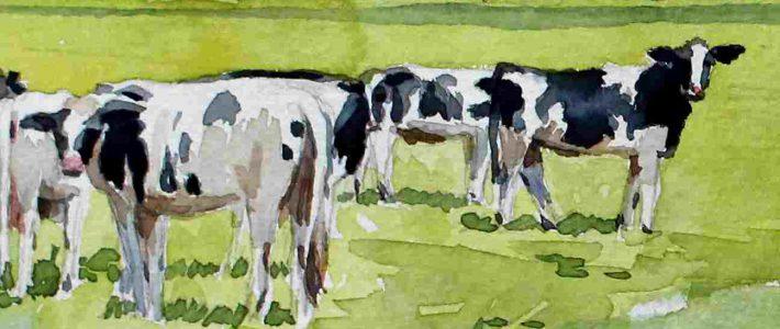 Thunder cows | Gewitterkühe
