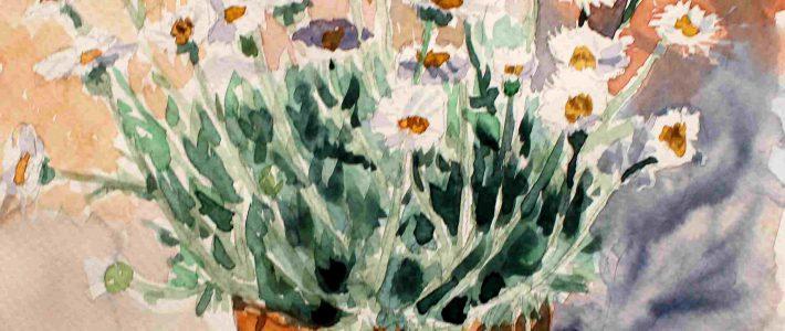 Daisies | Margeriten