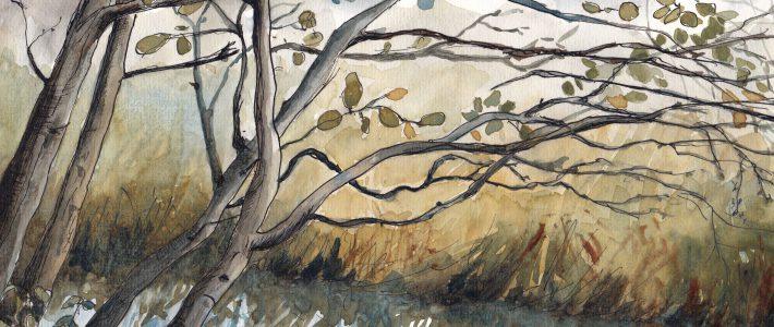 Drizzly branches | Äste im Nieselregen