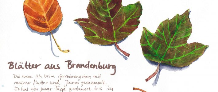 Autumn leaves | Herbstliche Blätter