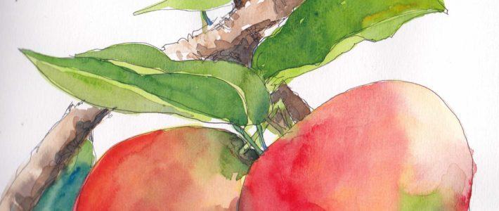 Die letzten paar Äpfel