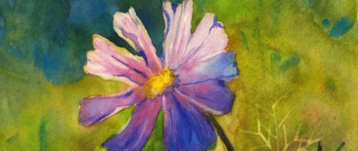 Sommerblumen: Drei Vorführbilder